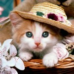 Cat-fancy-wallpaper_1600x1200