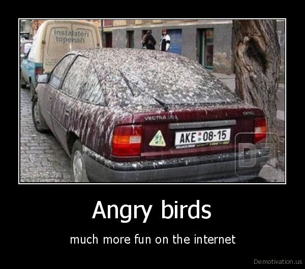 Real life angry birds lol