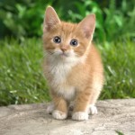 Happy Kittens HD Wallpapers