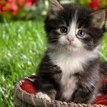 Happy Kittens HD Wallpaper 12