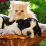 Happy Kittens HD Wallpaper 14
