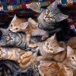 Happy Kittens HD Wallpaper 16