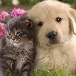 Happy Kittens HD Wallpaper 18