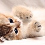 Happy Kittens HD Wallpaper 19