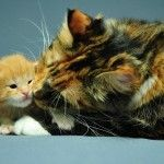 Happy Kittens HD Wallpaper 20