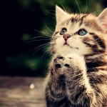 Happy Kittens HD Wallpaper 4