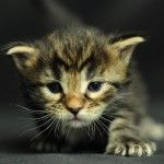 Happy Kittens HD Wallpaper 6
