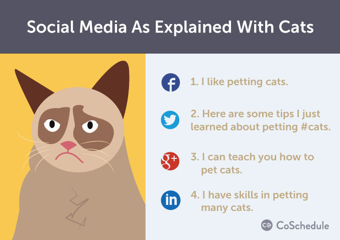 social media and cats